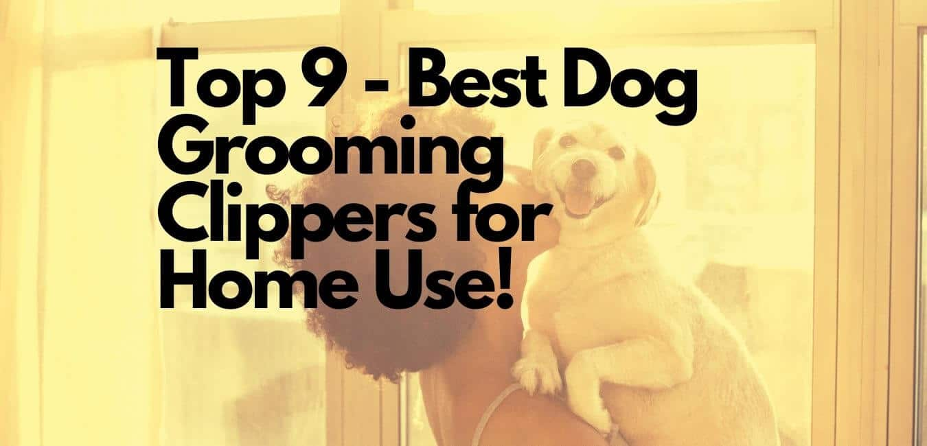 Best Dog Grooming Clippers for Home Use