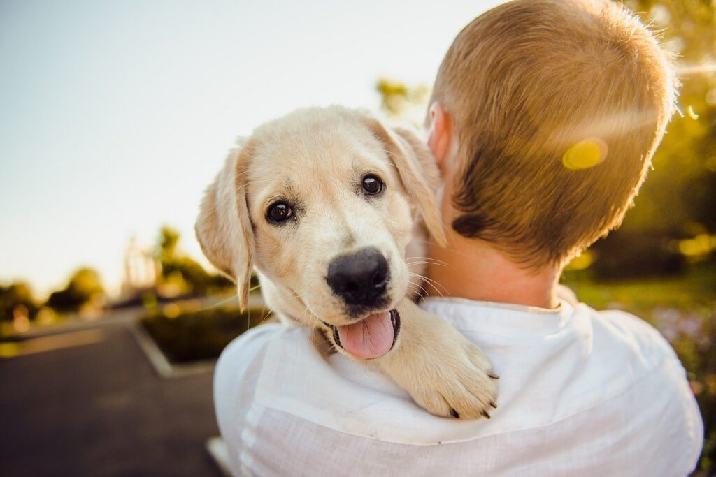 adorable, animal, dog - best dog grooming clippers for home use
