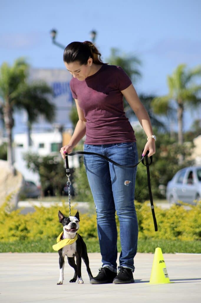 best long dog leashes for training